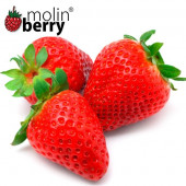 MOLINBERRY SWEET STRAWBERRY AROMA